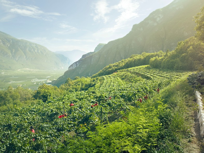 Ferrari's Hillside Vineryards in Norther Italy